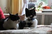 Очаровашки-братики ищут дом!!!!