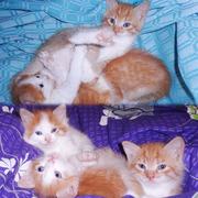«Как Котята Ждут Тебя»