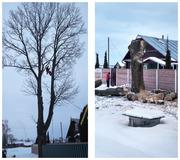 Кто еще хочет спилить дерево методом промышленного альпинизма?